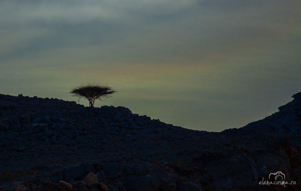 Oman 24